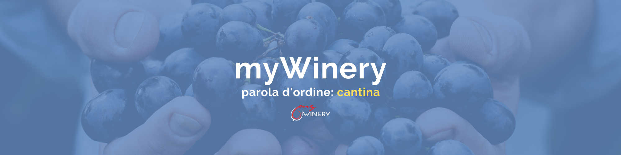 banner mywinery gestione cantina